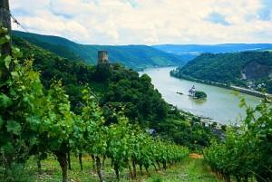 údolí Rýna