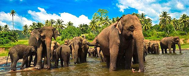 Srí Lanka – Cejlonský okruh spobytem umoře