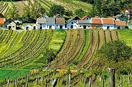 42. Weinparade vPoysdorfu