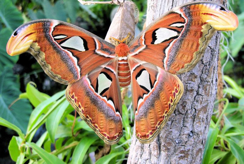 Do Vídně kmoři aza motýlími křídly