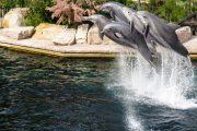 Německý LEGOLAND® anorimberská zoo sdelfináriem