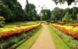 peradeniya_botanical_garden1