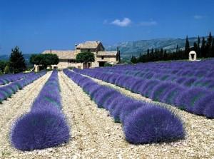 Za sluncem avůněmi francouzské Provence – sleva 100Kč na termín 24.–29.5.2016