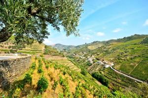 valle douro