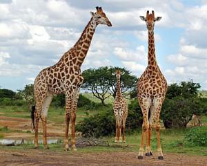 Hluhluwe Umfolozi Park