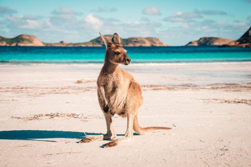 Velký okruh Austrálií / možné prodloužení na Nový Zéland