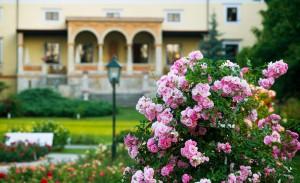 Výstava růží vklášteře Klosterneuburg