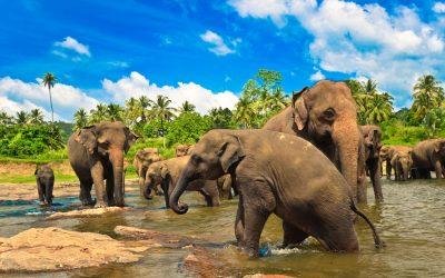 Srí Lanka – Velký okruh poostrově Cejlon spobytem umoře